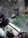 パンダ北京動物園