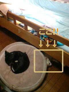 SDカード 091.jpg